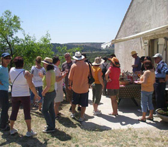 Visite et dégustation huile d'olive Provence